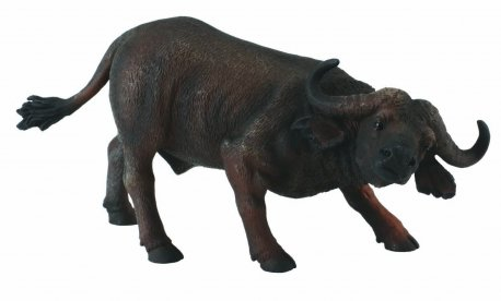 Bivol african - Collecta